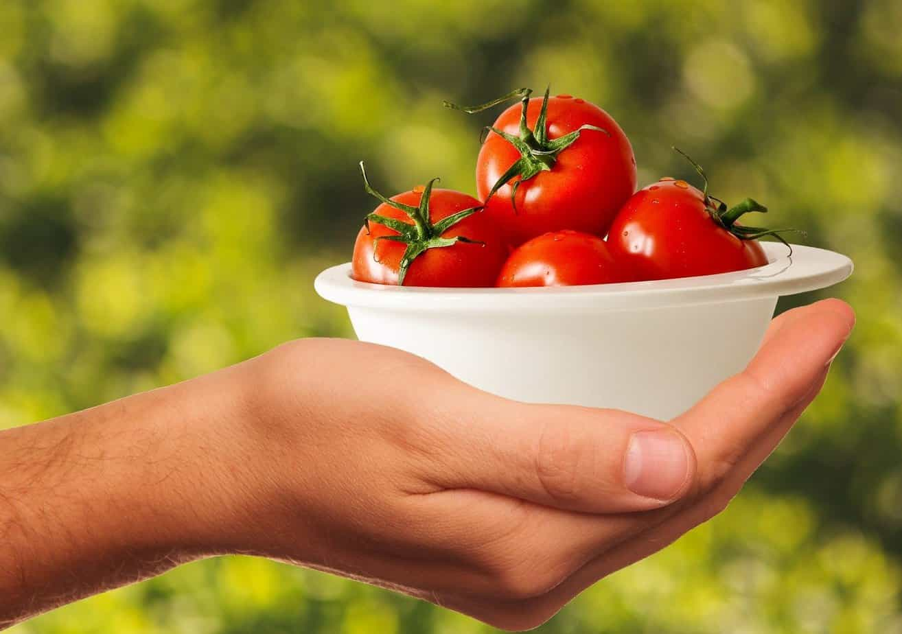 Top 5 Organic Fertilizers For Tomatoes